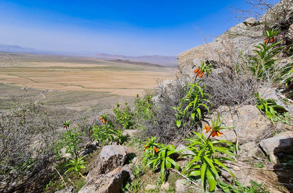 Aigul flower in the Aigul Too mountain in Batken