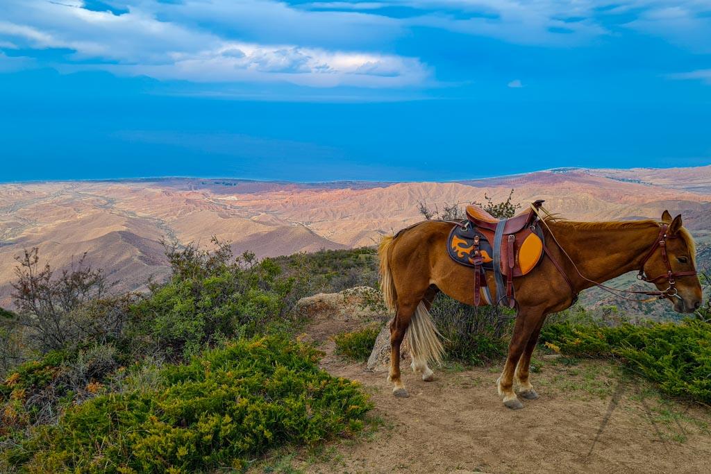Kyrgyzstan horse in Issyk Kul